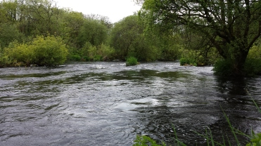 Castleconnell fishery, beat 3 (10)