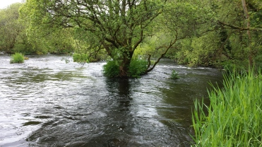 Castleconnell fishery, beat 3 (11)