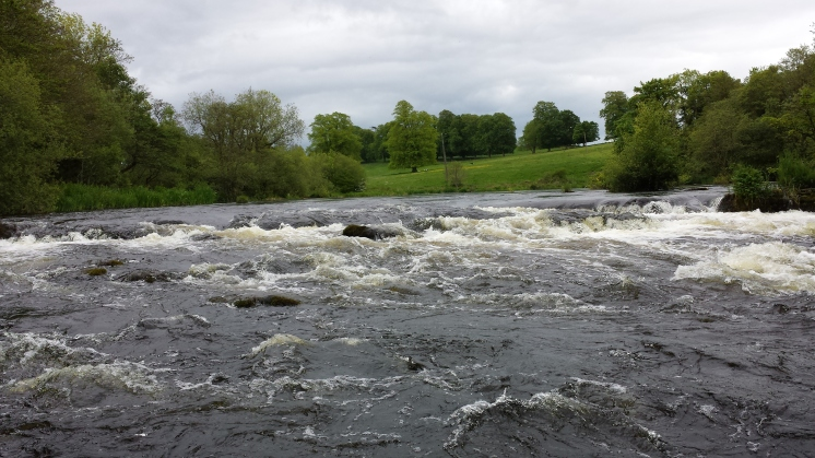 Castleconnell fishery, beat 3 (12)