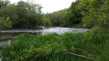 Castleconnell fishery, beat 3 (15)