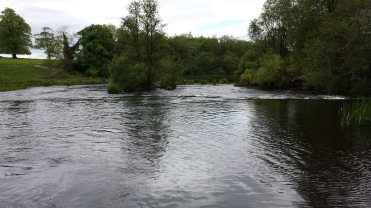 Castleconnell fishery, beat 3 (16)