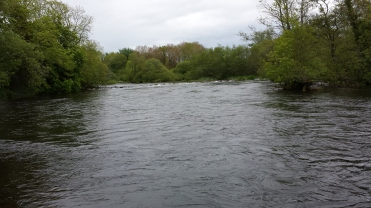 Castleconnell fishery, beat 3 (17)