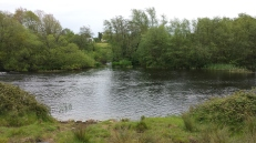 Castleconnell fishery, beat 3 (2)