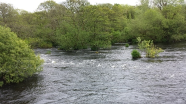 Castleconnell fishery, beat 3 (7)