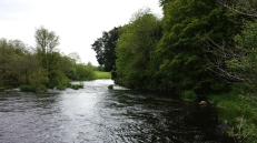 Castleconnell fishery, beat 3 (8)