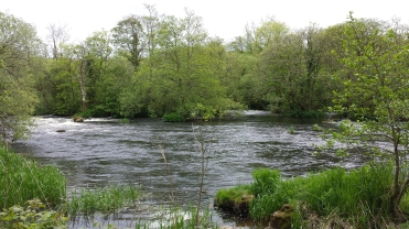 Castleconnell fishery, beat 3 (9)
