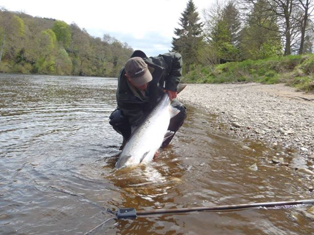 Major increase in elver and salmon runs on uk rivers old for Best time to fish tomorrow