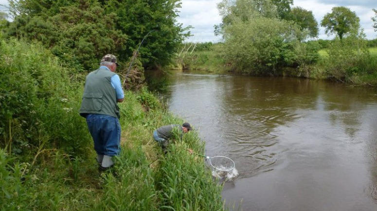 Mulkear grilse run; anglers on the river deters poaching in most cases