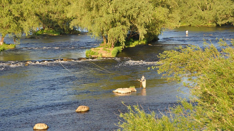 Salmon angling at Plassey (Old River Shannon)