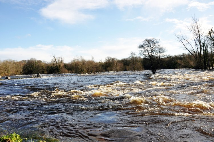 Old River Shannon Doonass, January 2014, with water spilling from from Parteen