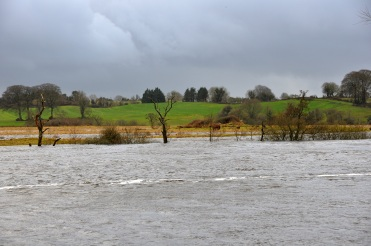 Old River Shannon, downstream Parteen Weir
