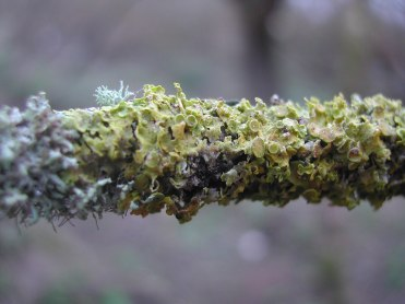 Alluvial forest ireland (4)
