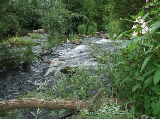 Lower River Shannon (15)