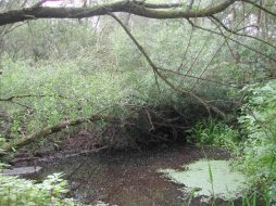 Lower River Shannon (6)