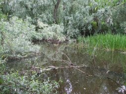 Lower River Shannon (7)