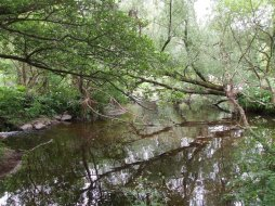 Lower River Shannon (8)