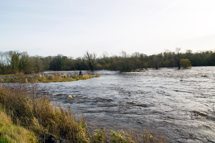 At the time of writing the current post (early December 2015) the ESB had just commenced spilling 'excess' water though Parteen Regulating weir. They do this when there is more than 400 cumecs available - which they abstract from the Lower River Shannon for hydroelectricity generation at Ardnacrusha. The stop-start approach to spilling water damages the ecology of this Natura 2000 river and is an archaic water management approach that was last reviewed in the 1920's. But thisspillage will also coincidentally coincide with peak silver eel migration so hopefully a greater proportion of critically endangered eels can avoid passing though the turbines. We are recommending the use of spillways is increased to help protect silver eels.