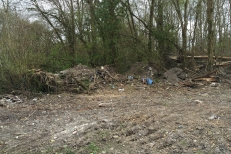 alluvial forest clearance